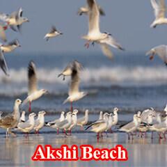 akshi-beach