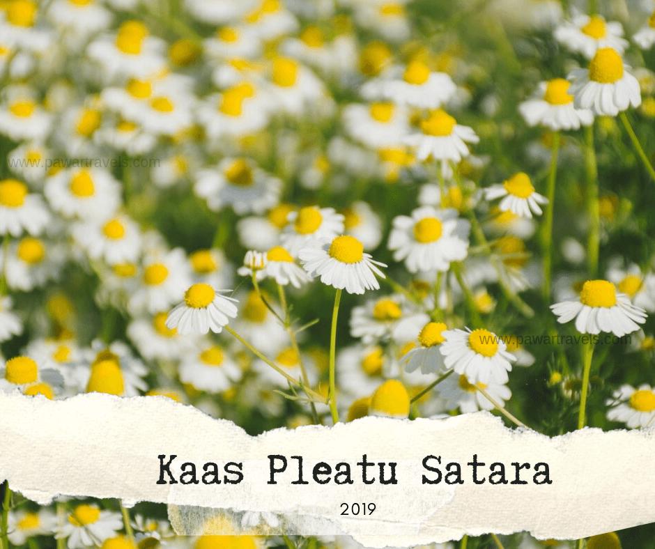 Pune To Satara Kaas Plateau
